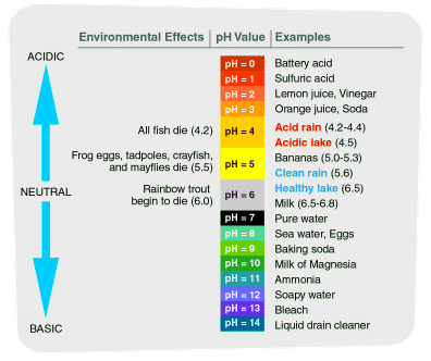 A chart listing the effects of pH value. The chart ranges from pH 0, which is highly acidic, to pH 14, highly basic. The chart has examples of each pH value. 0: Battery acid. 1: Sulfuric acid. 2: Lemon juice or vinegar. 3: Orange juice or soda. 4: Acid rain (which has a pH value between 4.2 and 4.4) and Acidic lake (pH value 4.5). 5: Bananas (pH 5.0 to 5.3) or Clean rain (pH 5.6). 6: Healthy lake (pH 6.5) or Milk (pH 6.5 to 6.8). 7: Pure water. 8: Sea water or Eggs. 9L Baking soda. 10: Milk of Magnesia. 11: Ammonia. 12: Soapy water. 13: Bleach. 14: Liquid Drain Cleaner. The effects are listed as followed: at pH 4.2, all fish die; at pH 5.5 Frog eggs, radpoles, crayfish and mayflies die, and at pH 6.0, Rainbow trout begin to die.