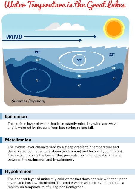 An image describing water temperature in the great lakes. The image is a depiction of the lake, with the top layer being above the water, including a depiction of wind and the sun. The next layer is the epilimnion, the surface layer of water that is constantly mixed by wind and waves and is warmed by the sun, from late-spring to late-fall. Its temperature is labeled as 22 degrees Celsius. The second layer is rather thin compared to those above and below it. It is the metalimnion, the middle layer characterized by a steep gradient in temperature and demarcated by the regions above (the epilimnion) and below (the hypolimnion). The metalimnion is the barrier that prevents mixing and heat exchange between the epilimnion and the hypolimnion. Its temperature is labeled as 10 degrees Celsius. The final layer is approximately the size of the first. It is the hypolimnion, the deepest layer of uniformly cold water that does not mix with the upper layers and has low circulation. The colder water with the hypolimnion is a maximum temperature of 4 degrees Celsius. This temperature is labeled on the chart.
